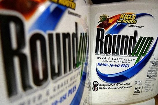 Bottles of Roundup herbicide, a product of Monsanto, are displayed on a store shelf in St. Louis. A San Francisco jury's $289 million verdict in favor of a school groundskeeper who says Roundup weed killer caused his cancer will face its first court test. Agribusiness giant Monsanto argued at a hearing Wednesday that a judge should throw out the verdict in favor of DeWayne Johnson.